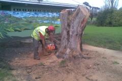 aborist-aborcaretm-stump-grinding-1