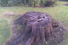 aborist-aborcaretm-stump-grinding-2