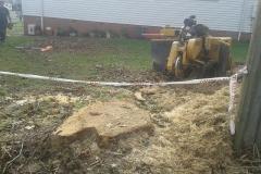 aborist-aborcaretm-stump-grinding-4