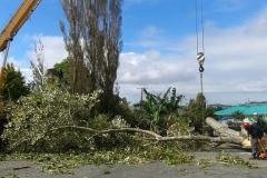 aborist-aborcaretm-tree-removal-1