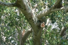aborist-aborcaretm-tree-trimming-and-pruning-1